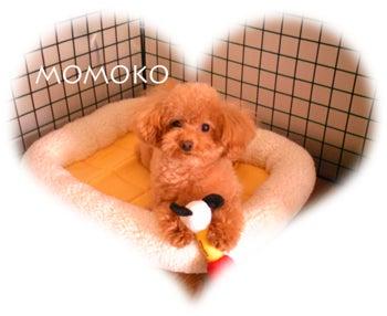 モモコとはっぴー生活♪(≧∇≦)