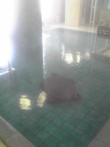 癒し王フジがツルツル美肌になる本物の温泉を紹介!温泉パワーで健康&綺麗に-網6