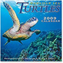 カメグッズ・・・情報ヨロシク-海亀カレンダー 2009
