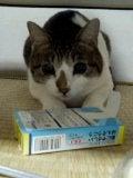 兼業主婦の息抜き日記-うちの猫です