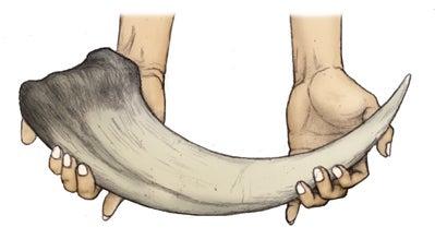 川崎悟司 オフィシャルブログ 古世界の住人 Powered by Ameba-メガラプトルの鉤爪