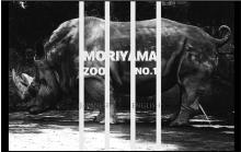 true-moriyama