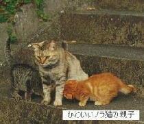 荻島動物病院のブログ-ネコの親子