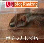3/9予告