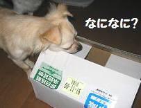 小包って何?おいしいの?