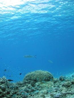 under the sea4