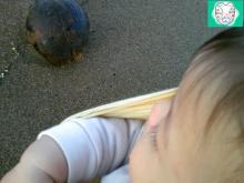 椰子の実との出会い