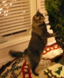 curious cat2