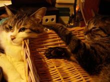 猫紙芝居2