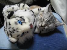 ナナのその日暮らし-腕枕