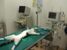 Kohnan Veterinary Clinicだより