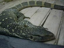 旅順・蛇博物館8