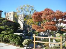 さくら彩 ~夫婦で世界4大陸クルッと一周~-日本庭園