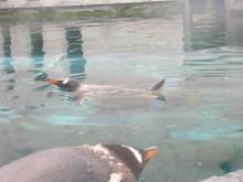 ペンギン館