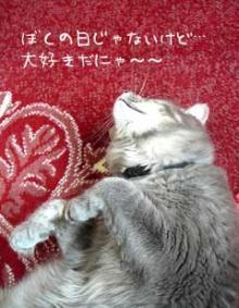 hina-maturi 2007 cat