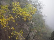 長城の紅葉