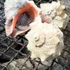 2月会「牡蠣がたべたい」の画像