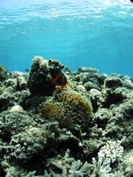 under the sea3
