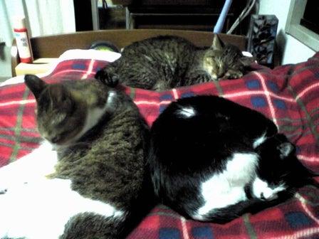moonlight-mile-cats