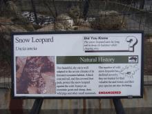 snowleopardplate