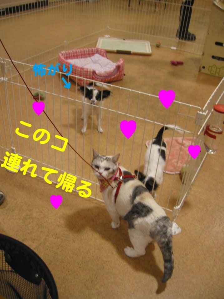 ひとめぼれ3