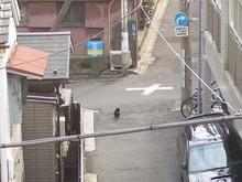 くろちゃん-31