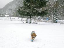 遊んでる最中も どんどん雪は降り積もり、、
