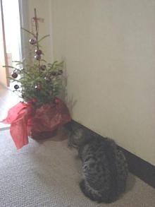 キラの週末手芸倶楽部-クリスマスツリーと猫