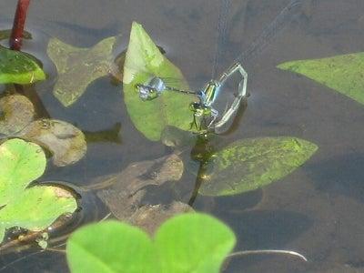 ぐんま昆虫の森           ミュージアムショップ店長の日記-夏休み 自然体験 子供と遊べる場所