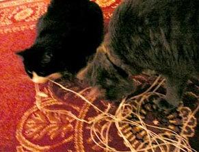 curious cat3