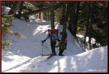 ロフトで綴る山と山スキー-栂樹林帯