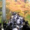 鯖江もみじ市民号で「秋の京都」への画像
