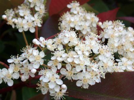 白い花...