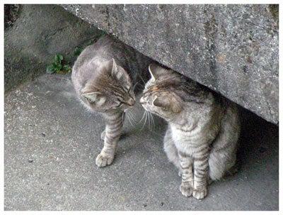たわむれるネコ