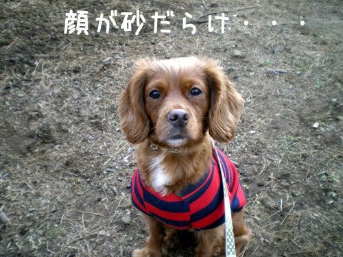 SHAMPOO★BAMBI★POKKEとHappyLife