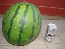 大きな西瓜