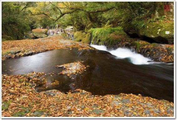 落ち葉の渓谷