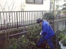 植木を抜くおばこ店長