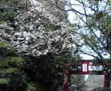 宮崎神宮2