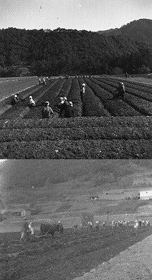 70年前の農園の様子祖父撮影