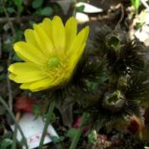 庭の福寿草と早春の雑…