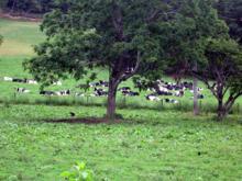帯広の牧草地帯