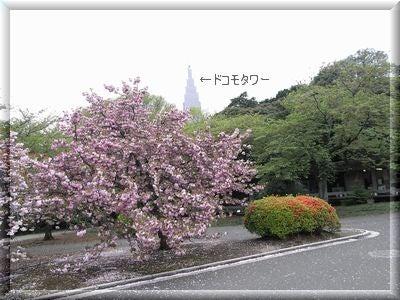 新宿御苑7