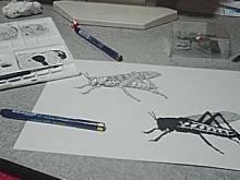 描き下ろしイラストの制作