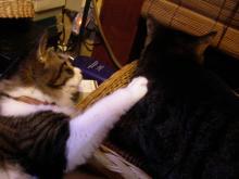猫紙芝居3