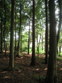 八木が谷北市民の森