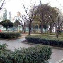 堀川の桜  その3 …