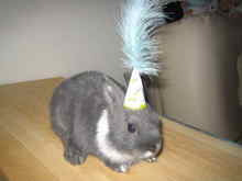 Peter birthday