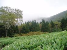 峰の大池2
