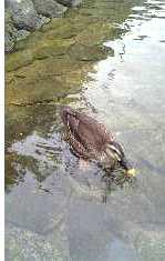 岐阜高山「江名子川」2007.8.17